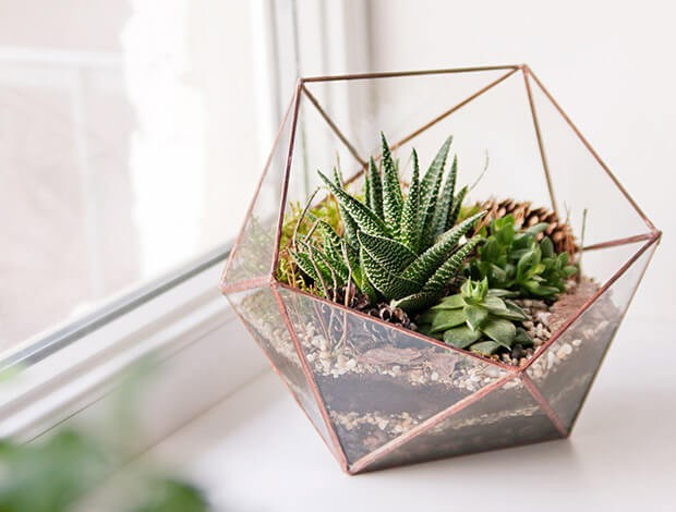 terrarium, tips, home, care, green, plants
